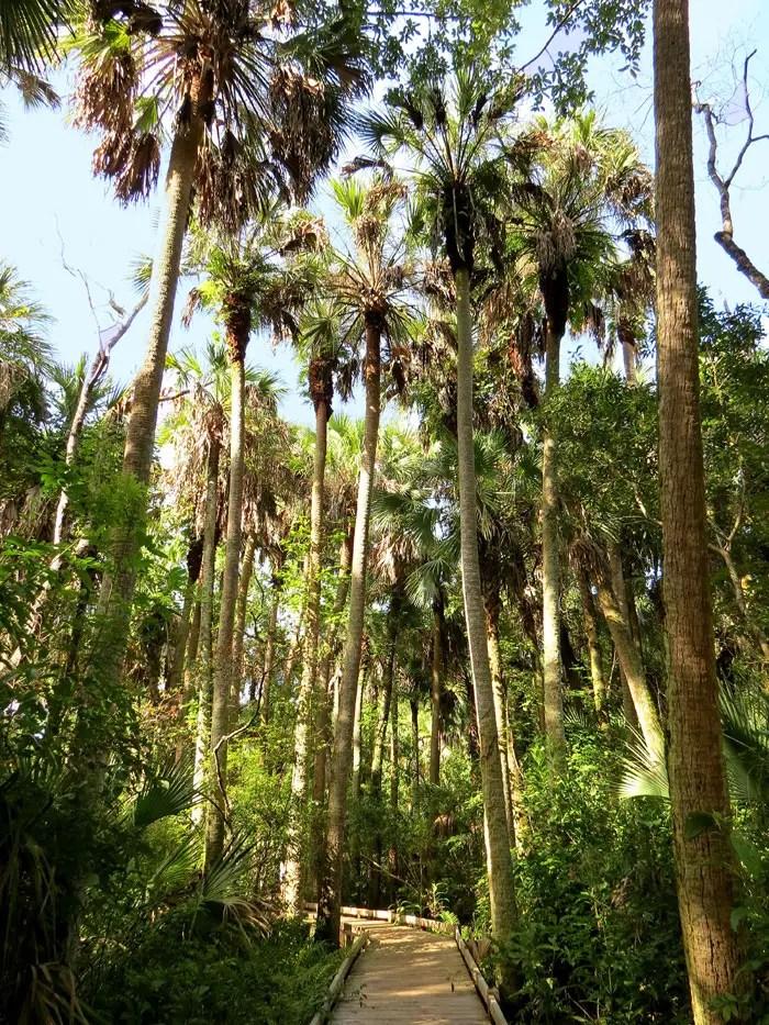 Timucuan trail, Alexander Springs, Florida trail