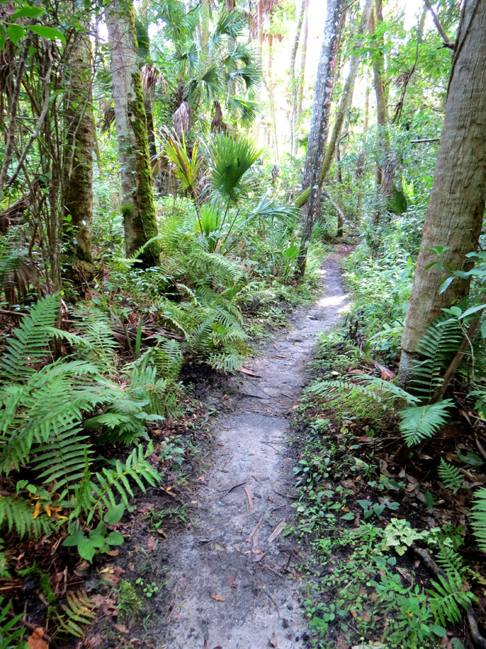 Timucuan trail, Alexander Springs, Florida trail