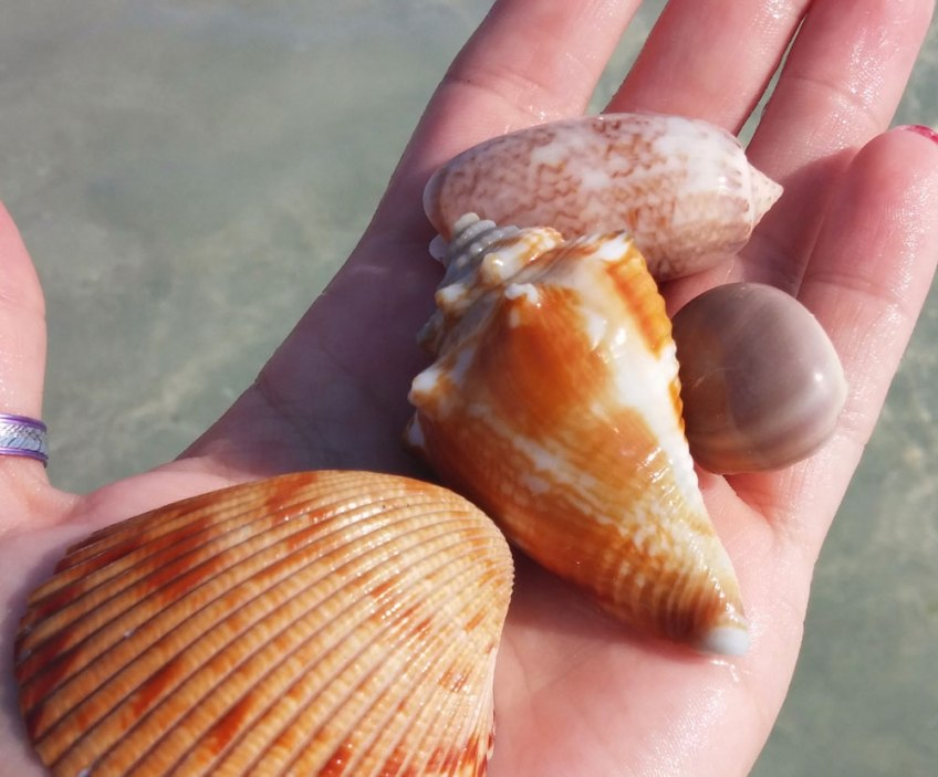 Florida sea shells, shells, tips on boating with kids