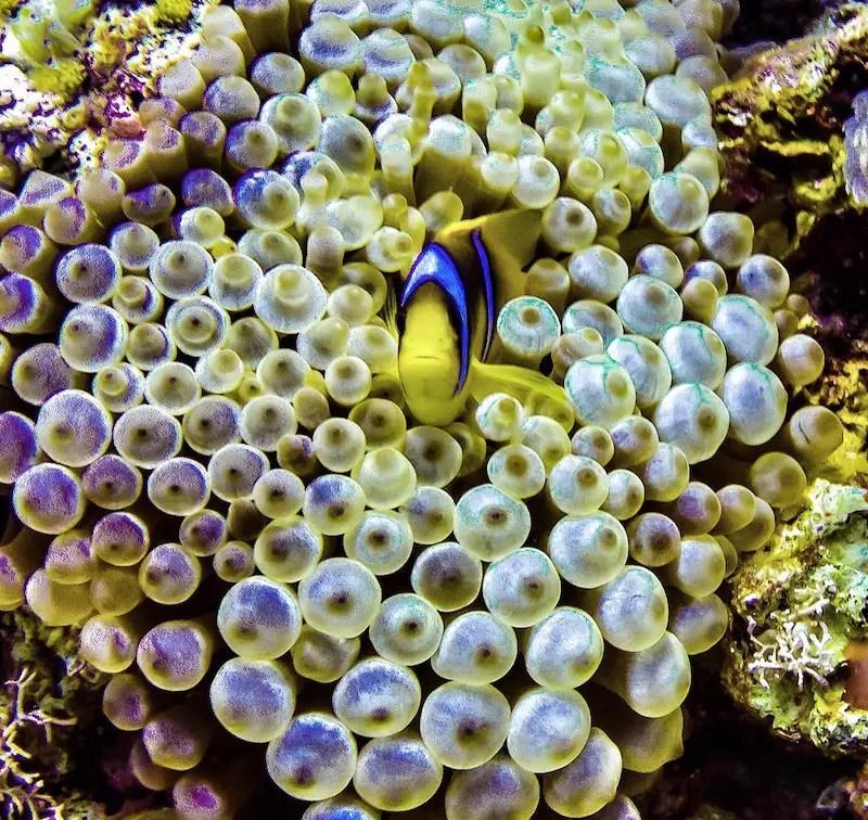 best diving in the world dahab egypt