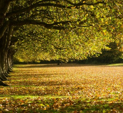 Fall in the UK