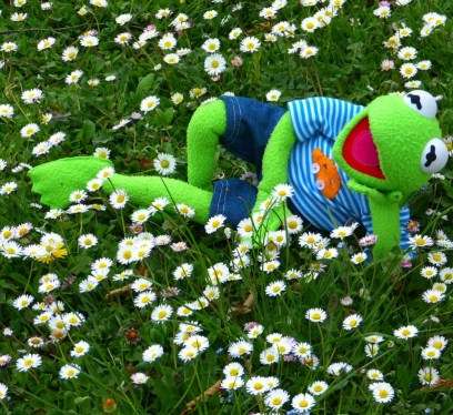 chill out, kermit the frog, kermit
