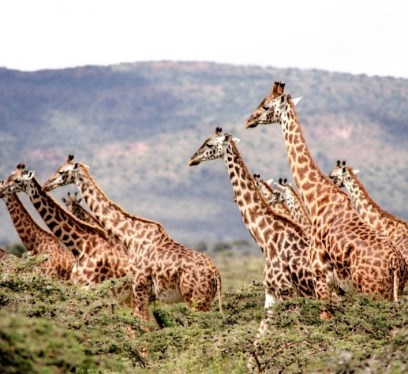 travel to africa, Uganda safaris