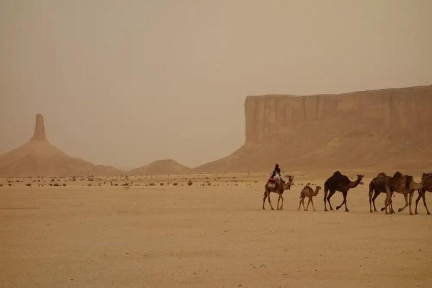 camel in desert, How to Travel to Saudi Arabia