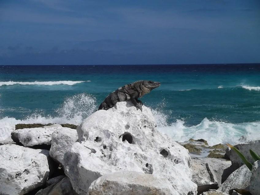 Riviera Maya Excursions Cozumel