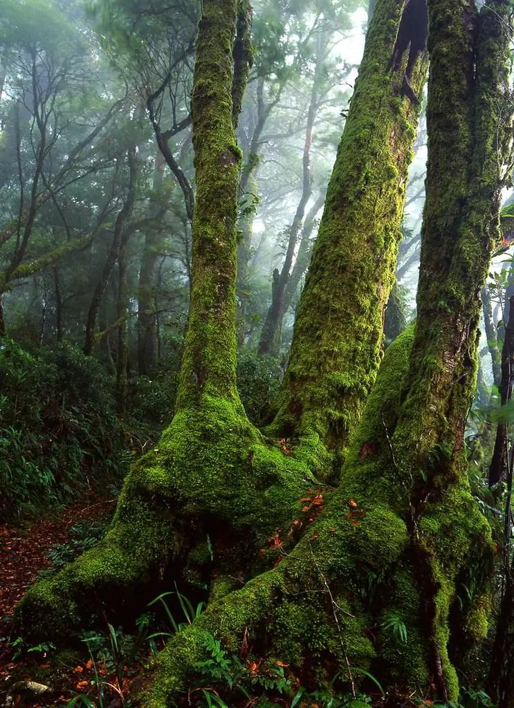 Lamington National Park Magicalplaces in Queensland