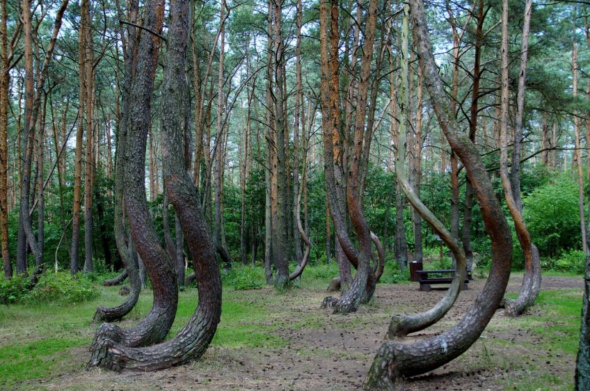 Crooked Forest, Poland, Europe