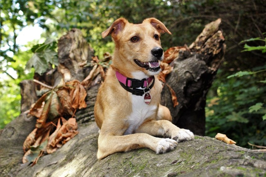 hiking with your pet, pet id