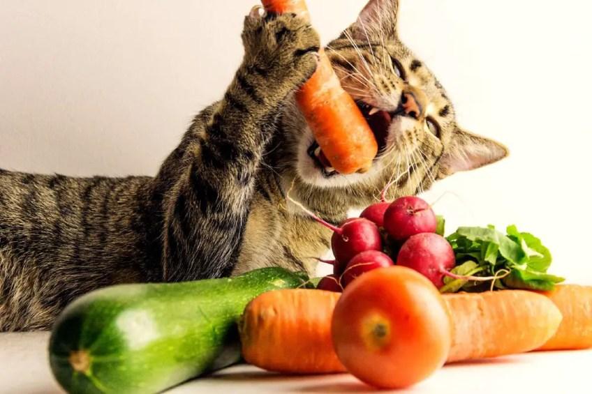 cat eating vegetables, healthy cat food