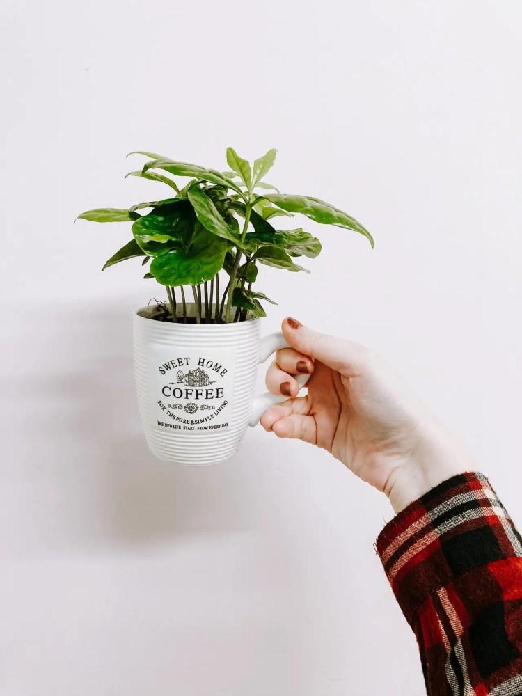 decoration ideas for travel, travel home decor ideas, coffee mug planter