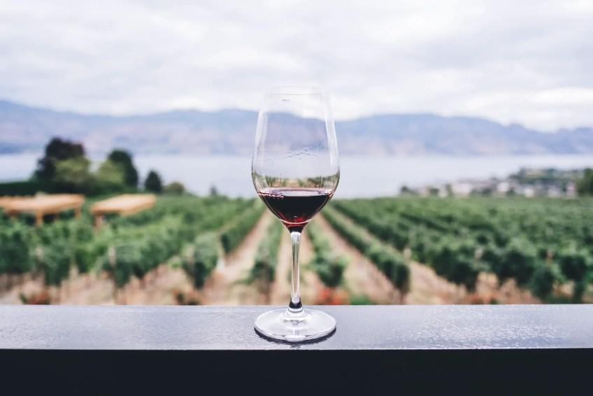 Vineyard with wine glass