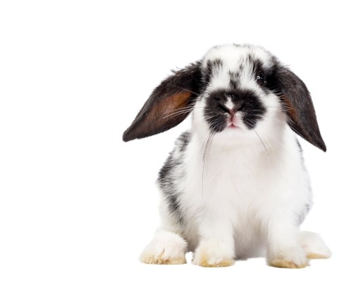 bunnies, rabbit