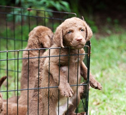 Dog playpen