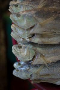 Phnom Penh, Augustus 2016, Fish #5164