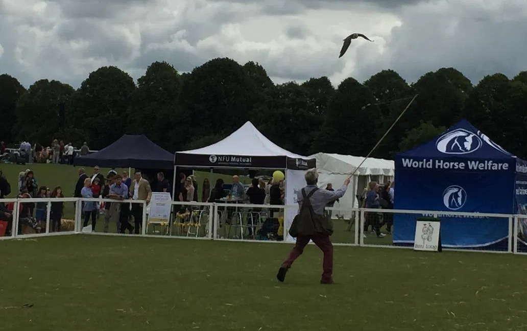 Ben Long with a falconry display during the Gloucestershire Festival of Polo