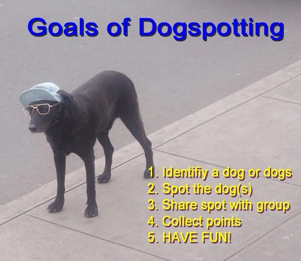 A Feminist Analysis of Orthodox Dogspotting | The Familiar