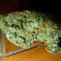 Hydro Skunk weed