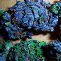 Blue Star weed