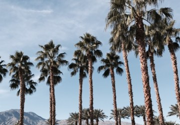 Palm Springs: Recap + Recommendations