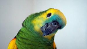 parrot-898125_640