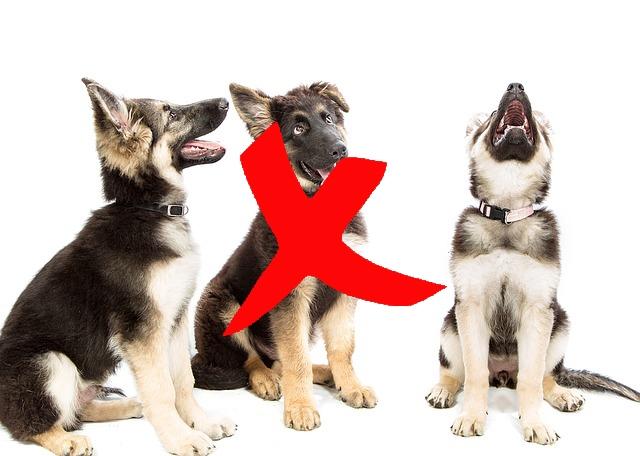 puppies-no