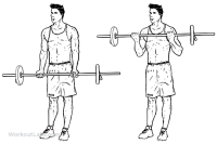 barbell_curle_m_workoutlabs