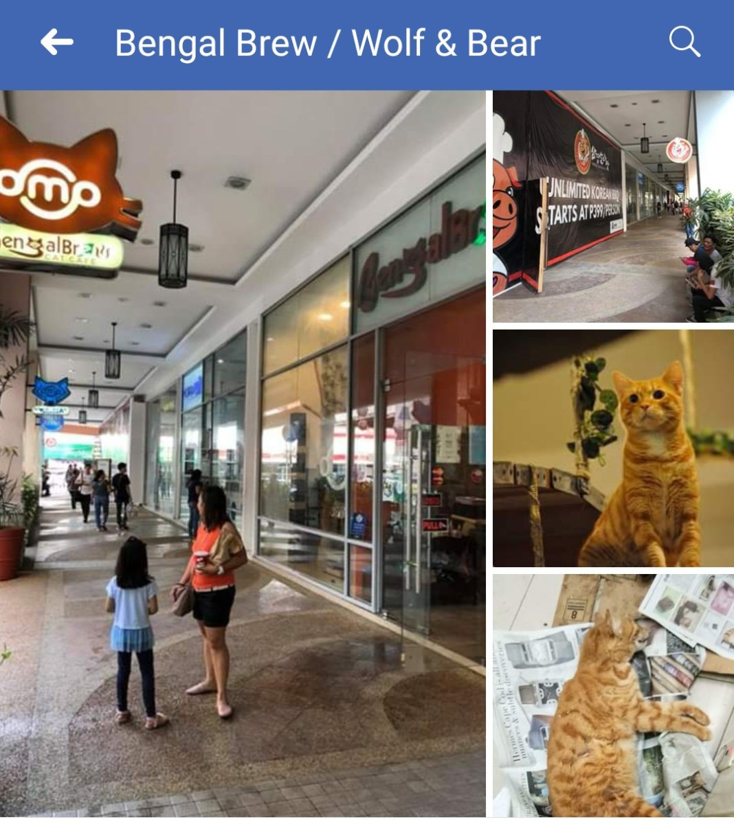 Popular Pet Cafe Bengal Brew air Concern over Cats Death Allegedly due to nearby Korean Grill