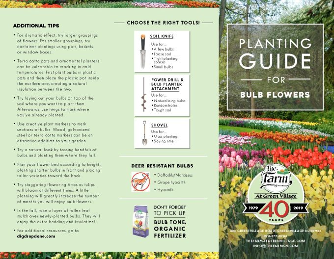 Download our: Planting Guide for Bulb Flowers - The Farm ...