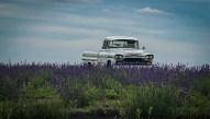 U Pick Lavender