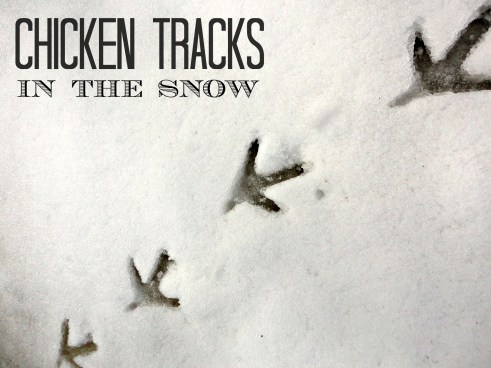 chicken tracks