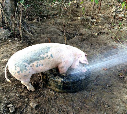 farm chores 17