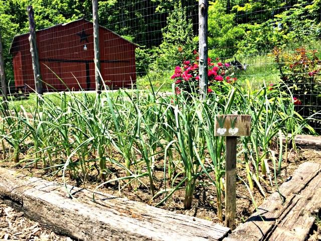 may garden 8
