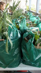 thanksgiving CSA bags
