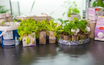 How Do You Make Seedling Trays At Home?