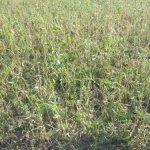 Hail Damaged Soybeans via thefarmerslife.com