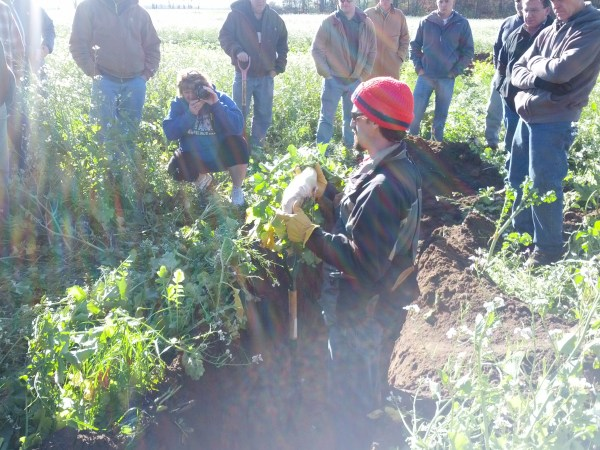 Picking up cover crop knowledge at a field day.  That is ahuge radish he is holding.  This pit is in a bit of an experimental field.  The farmer had a failed crop due to the drought so he planted radishes and ryegrass in July.  This shot was taken the first week of November.