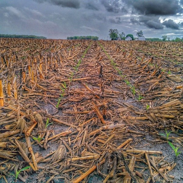 Corn on Corn via thefarmerslife.com