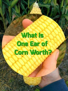 What is One Ear of Corn Worth? via thefarmerslife.com