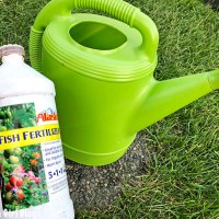 How to Fertilize Vegetables using Alaska Fish Fertilizer (Video)
