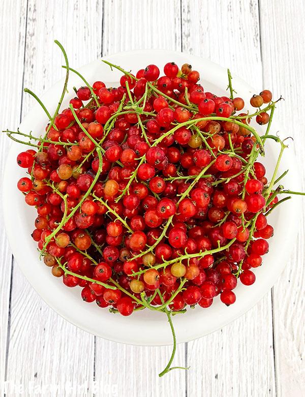 backyard gardening, berry garden, homebaking, homegrown redcurrant, love gardening, organic redcurrant, redcurrant, Redcurrant Scones Recipe, scones