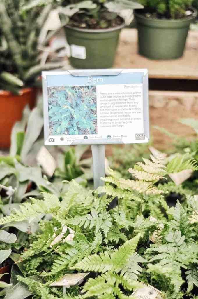 information on snake plant