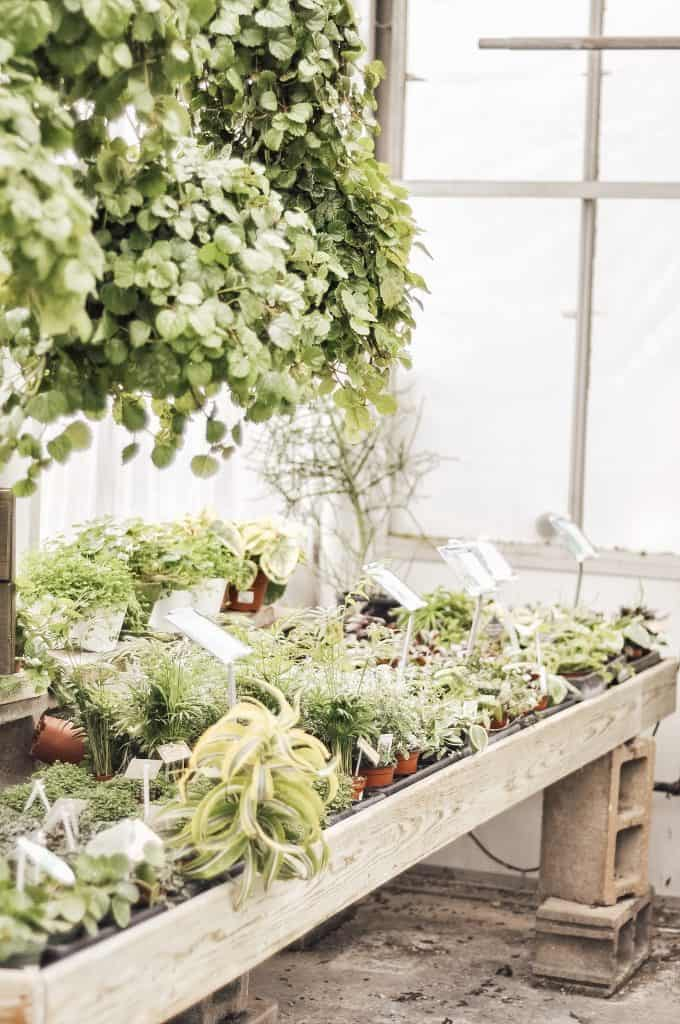 Large and small plants in the nursery.