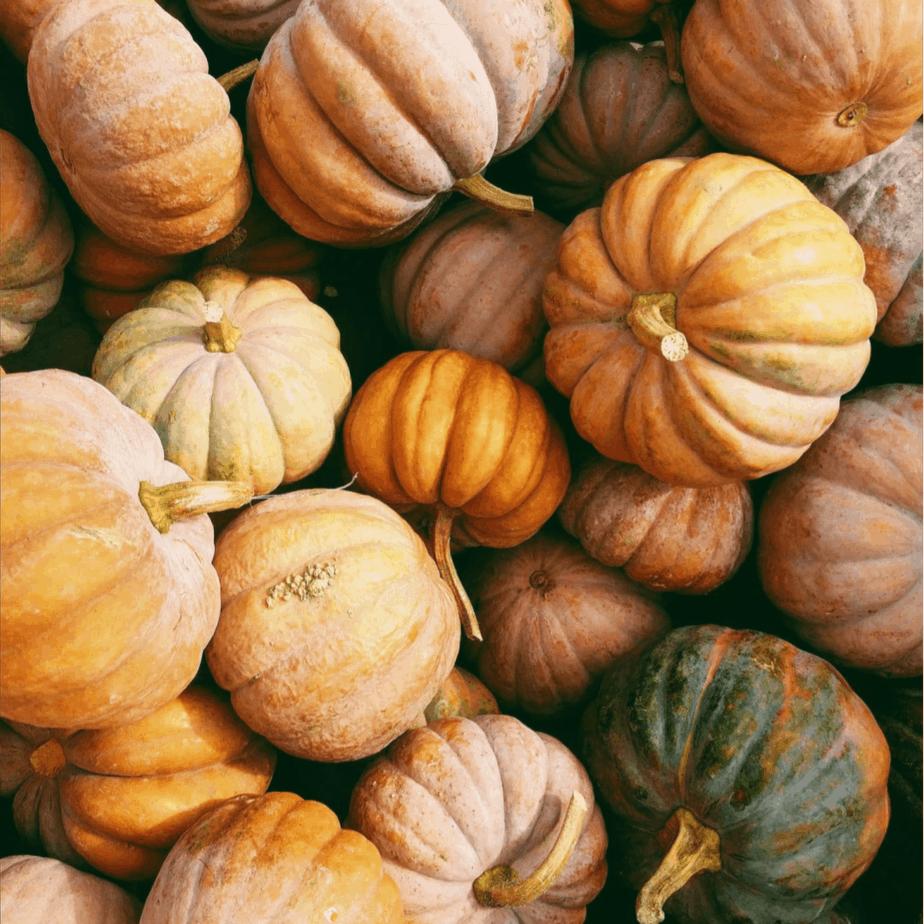 Easy Vegan pumpkin bars – Turning your fall pumpkin display into yummy treats!
