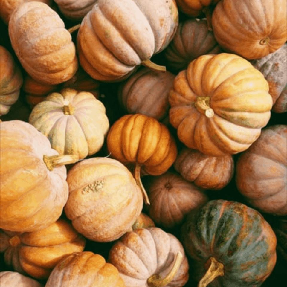 pile of heirloom pumpkins