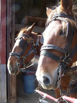 2016_11_10-11-draft-horse-workshop-11