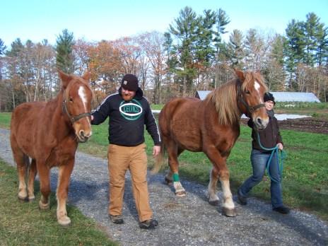 2016_11_10-11-draft-horse-workshop-21