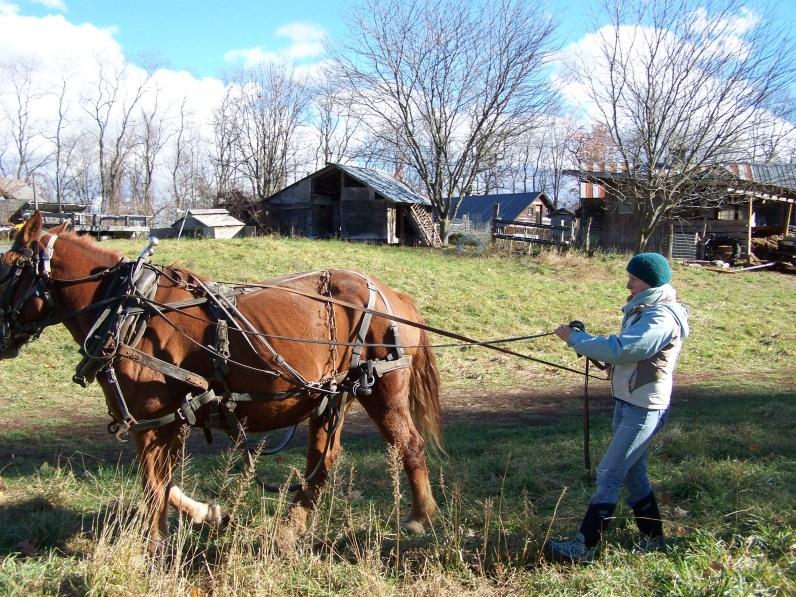2016_11_10-11-draft-horse-workshop-30