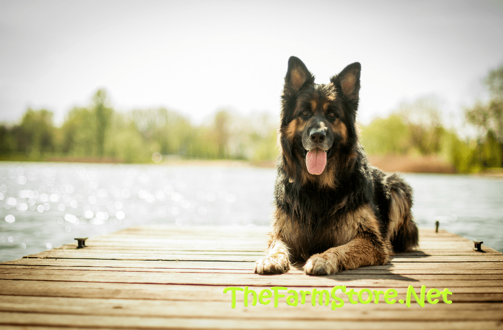 BEST DOG COLLARS FOR GERMAN SHEPHERDS