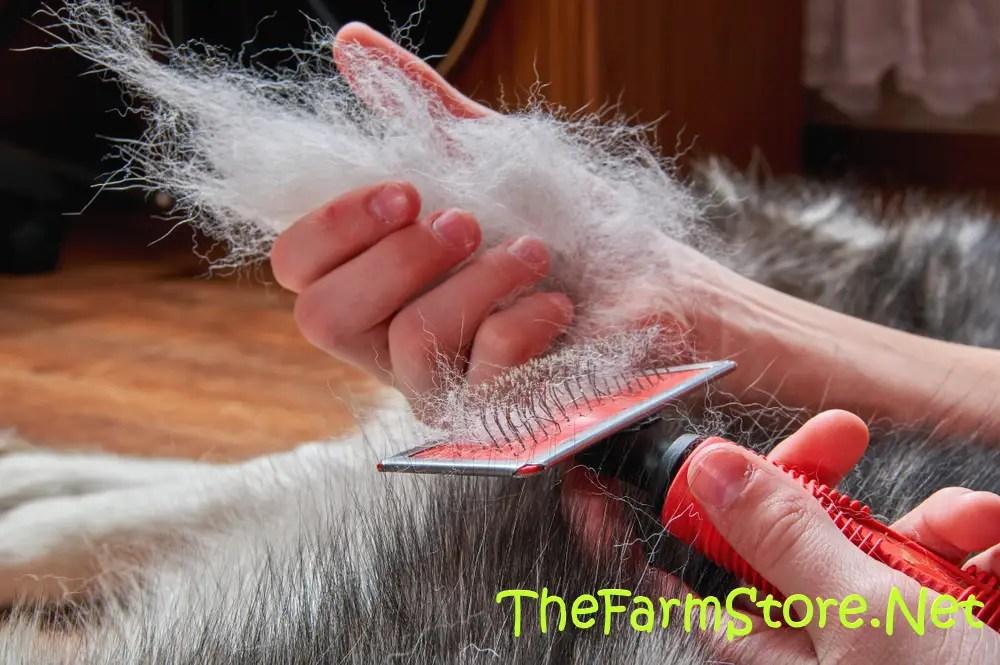 Best Cat Brush for Shedding (Short & Long Hair) 2020