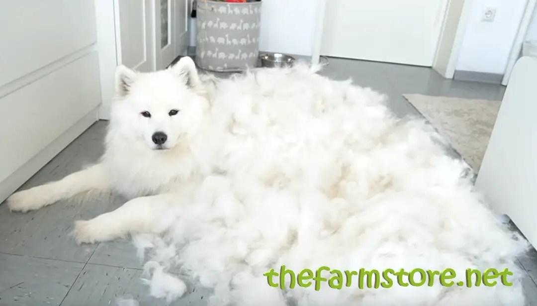 Best Dog Grooming Comb
